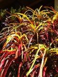 Bush Colourful nel Perù Immagini Stock