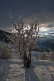 Bush covered by snow. This is how looks like a plant after a snowfall at sunset in the alps. Is beautiful is it not Stock Photography