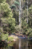 Rainforest creek. Beautiful vibrant bush rainforest creek in Tasmania royalty free stock images