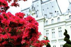 Bush czerwone azalie na tle Gocki pałac zdjęcia stock