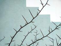 Bush d'aubépine en hiver photographie stock libre de droits