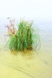 Bush da grama do lago em terra Fotos de Stock