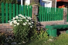 Bush daisies near green wooden bench Royalty Free Stock Photos