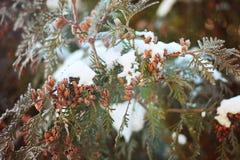 Bush dans la neige Images stock