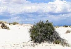 Bush dans les dunes Photographie stock libre de droits