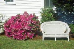 Bush de azaleas al lado del asiento para dos de mimbre, Beaufort, SC Imagen de archivo