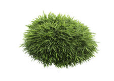 Bush de bambou d'isolement Photo libre de droits