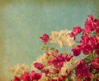 Bush de fleur de bouganvillée Image libre de droits