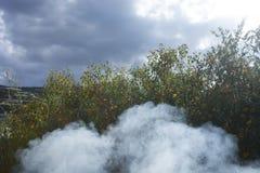 Bush de fleur sauvage de tournesol dans la scène jaune et colorée dans la fumée au Lat du DA, Vietnam photo libre de droits
