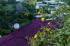 Bush de fleur sauvage de tournesol dans la scène jaune et colorée dans le Lat du DA, Vietnam photo stock