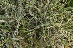 Bush de la hierba verde foto de archivo