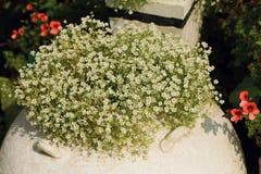 Bush de las pequeñas flores blancas en la maceta adornada en jardín imagen de archivo