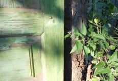 Bush de ortigas y de la puerta vieja Fotos de archivo
