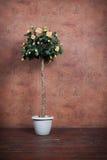 Bush de rosas amarelas em um vaso Fotografia de Stock
