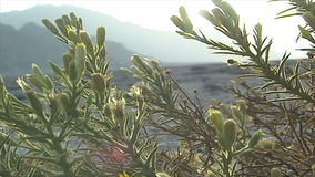 Bush in de Sinai woestijn Egypte stock footage