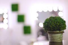 Bush decorativo verde en el fondo del sitio de la cosmetología y de la silla del maquillaje con las flores fotos de archivo