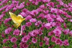 Bush dei fiori rosa luminosi e della foglia asciutta immagine stock