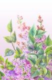 Bush del lillà con l'acquerello Fondo floreale dipinto da Han royalty illustrazione gratis