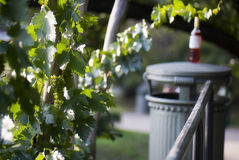 Bush dell'uva bianca e della bottiglia di vino Immagini Stock