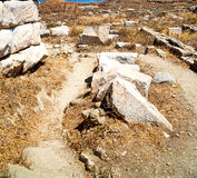 Bush   in delos greece the historycal acropolis and old ruin sit Royalty Free Stock Photography