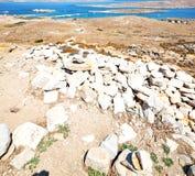 Bush   in delos greece the historycal acropolis and old ruin sit. In delos       greece the historycal acropolis and         old ruin site Stock Photo