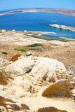 Bush   in delos greece the historycal acropolis and old ruin sit. In delos       greece the historycal acropolis and         old ruin site Royalty Free Stock Images