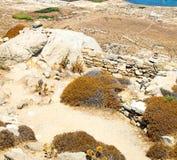 Bush   in delos greece the historycal acropolis and old ruin sit. In delos       greece the historycal acropolis and         old ruin site Royalty Free Stock Image