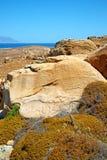 Bush in delos greece the. In delos greece the historycal acropolis and old ruin site stock photo