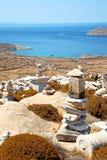 Bush   in delos greece the historycal. In delos       greece the historycal acropolis and         old ruin site Royalty Free Stock Photos