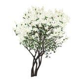 Bush der blühenden weißen Flieder Lizenzfreie Stockfotos