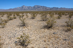 Bush in the desert. National park Joshua tree at the sunny day royalty free stock photo