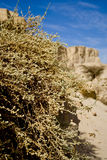 Bush in desert Royalty Free Stock Photography