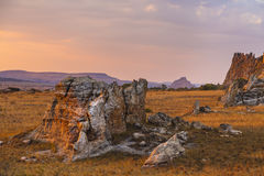 Bush desert on a colorful sunset landscape in Madagascar Royalty Free Stock Image
