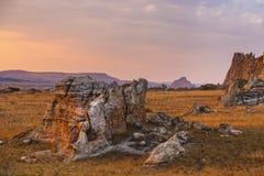 Bush desert on a colorful sunset landscape in Madagascar Royalty Free Stock Image