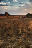 Bush desert on a colorful sunset landscape in Madagascar Royalty Free Stock Photo