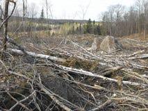 Bush destruction in Quebec. Canada, north America. Bush destruction in Quebec. Canada north America royalty free stock photos