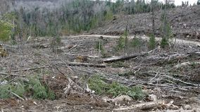 Bush destruction in Quebec. Canada, north America. Bush destruction in Quebec. Canada north America stock photo