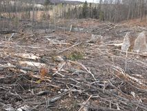 Bush destruction in Quebec. Canada, north America. Bush destruction in Quebec. Canada north America royalty free stock photography