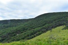 Bush die in de bergen lopen Stock Foto
