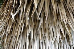 Bush of dried leaves background Royalty Free Stock Photo