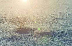 Bush dry grass in the snow Stock Photography