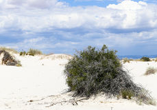 Bush in the dunes. Bush and grasses growing in the dunes of White Sands National Monument in New Mexico, USA Royalty Free Stock Photography