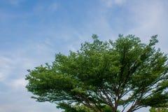 Bush e cielo Fotografia Stock