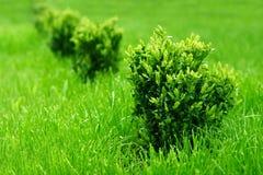 Bush e hierba Foto de archivo libre de regalías