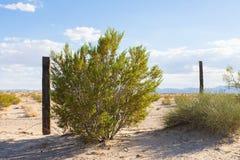 Bush e recinto Line in Mojave Fotografia Stock Libera da Diritti