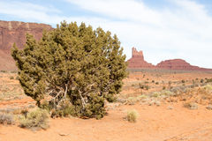 Bush with Earth Monuments Royalty Free Stock Photos