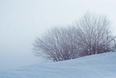 Bush ed alberi coperti di neve in un giorno nebbioso immagini stock libere da diritti