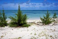 Bush in einem Strand in Mauritius Stockfotografie