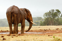 Bush Elephant standing sideways at the dam Royalty Free Stock Photography