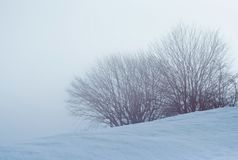 Bush en bomen met sneeuw in een mistige dag wordt behandeld die royalty-vrije stock afbeeldingen